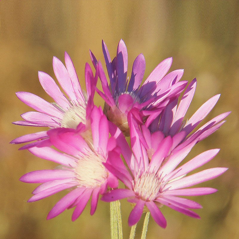 types-of-flowers-with-pics
