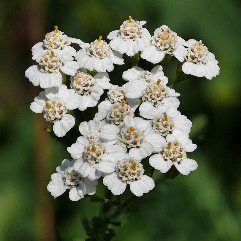flowers-for-garden
