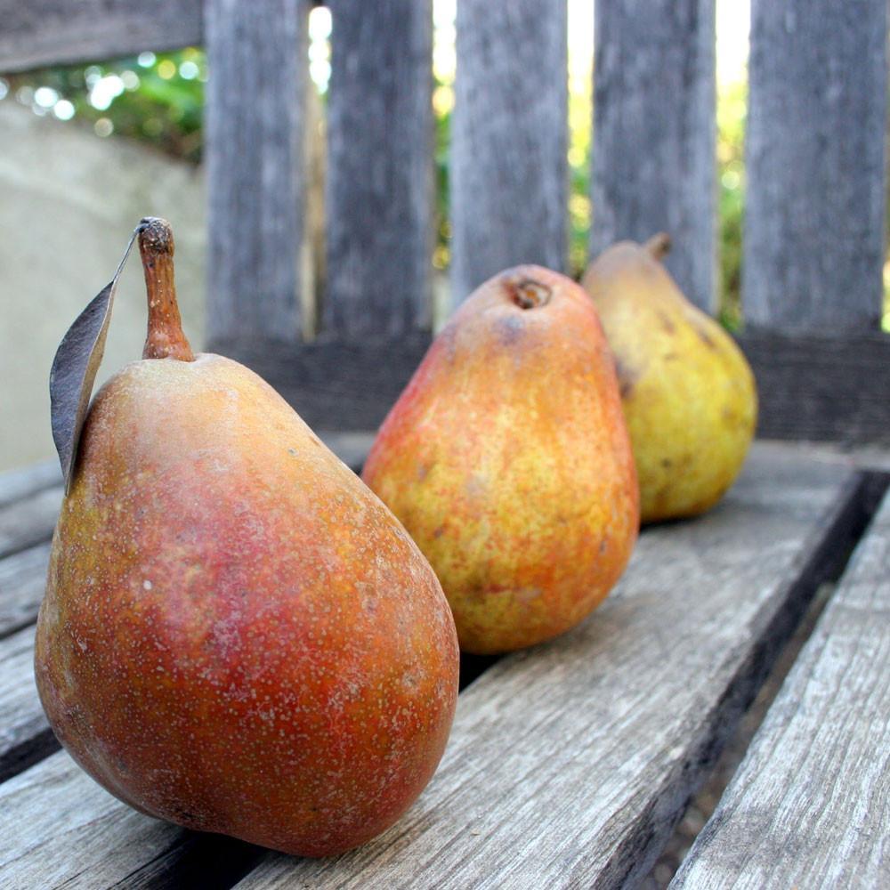2020 Warren Pear Legacy | Organic Fruit Club | 8 Shipments