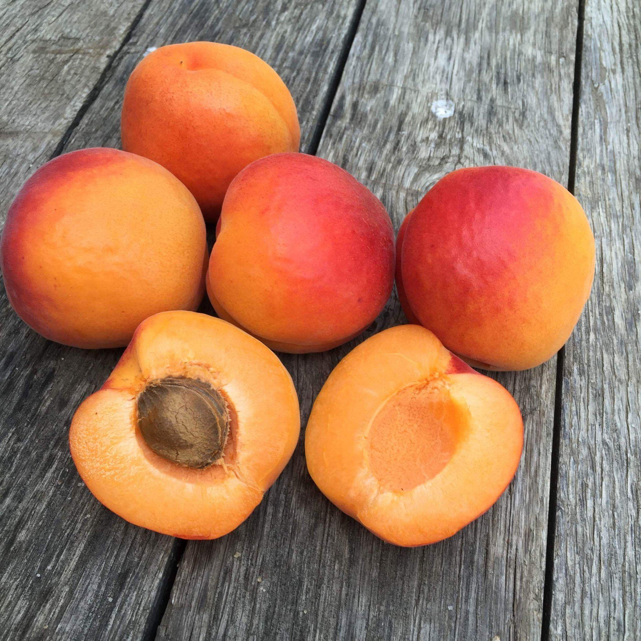 2021 Apricot Harvest | Organic Fruit Club | 2 Shipments