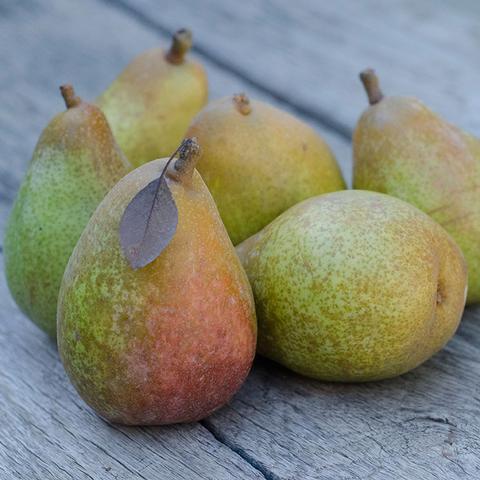 2020 Warren Pear Legacy (Petite) | Organic Fruit Club | 4 Shipments