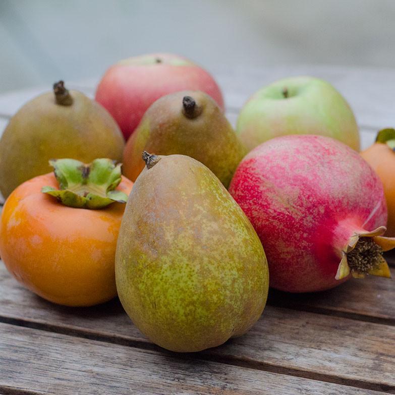 2021 Flavors of Fall | Organic Fruit Club | 6 Shipments
