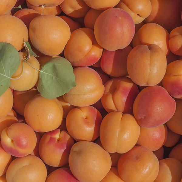 2021 Golden Sweet Gala | Organic Fruit Club | 3 Shipments