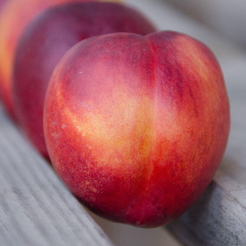 2021 Need My Nectarines | Organic Fruit Club | 3 Shipments