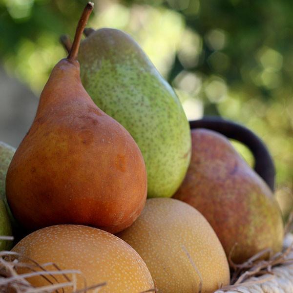 2021 Pear Parade | Organic Fruit Club | 4 Shipments