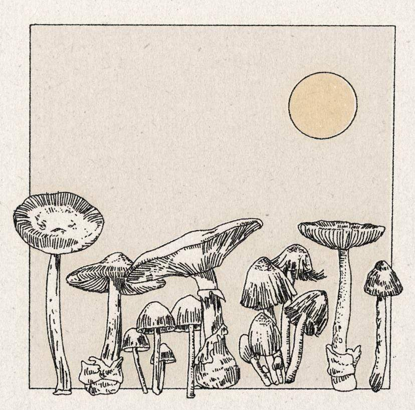 Real Fun Wow Mushroom Print