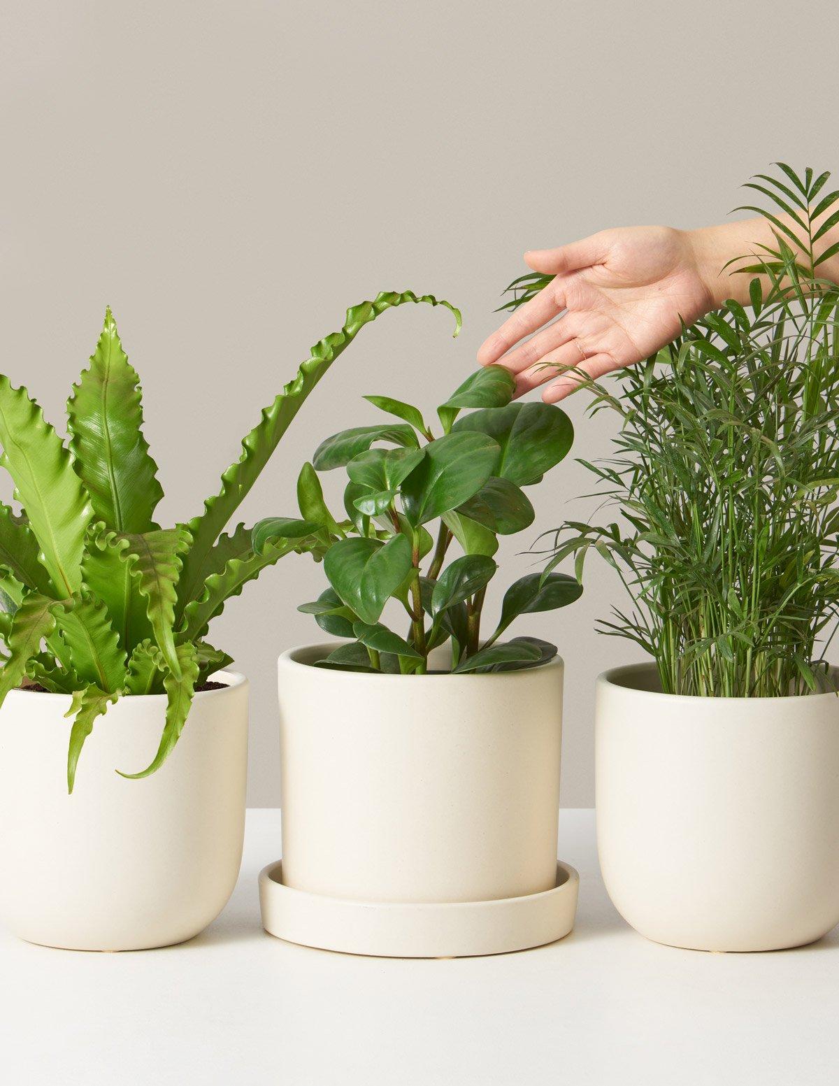 Pet Friendly Plant Subscription