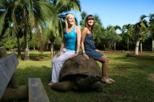 Tortoise In Mauritius