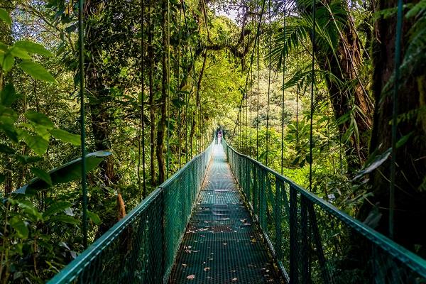 Hanging Bridges National park