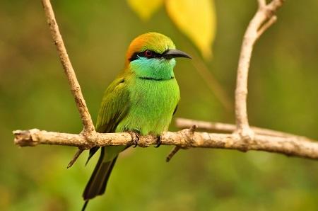 Bird Sri Lanka
