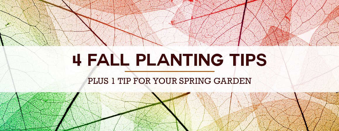 4 Fall Planting Tips – Plus 1 Tip for Your Spring Garden