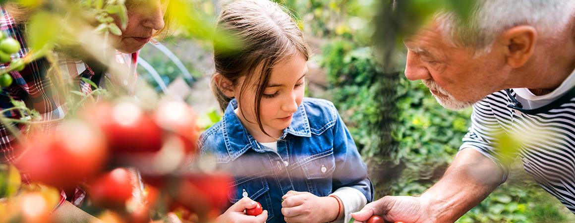 Let it Grow! The Benefits of Gardening