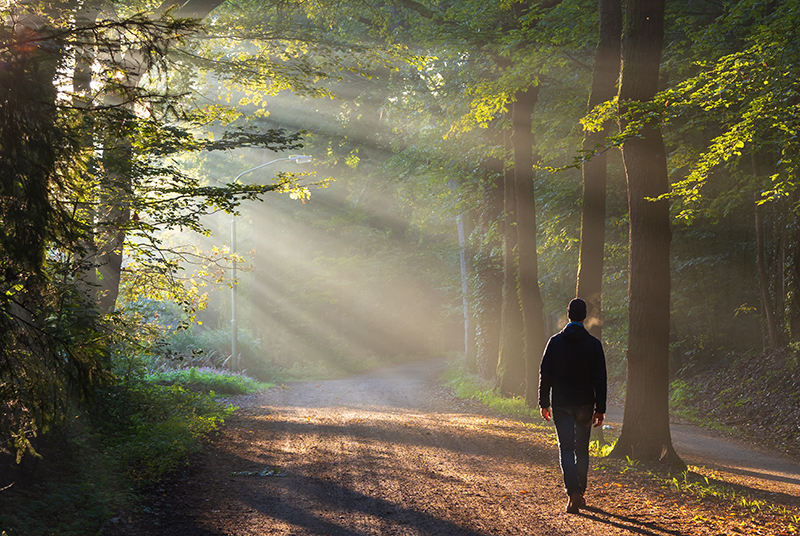 Dharma, le chemin d'éveil de la conscience, personne marchant dans la foret avec les rayons de soleil qui traversent les arbres