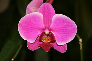 Orchids clean the air in your home