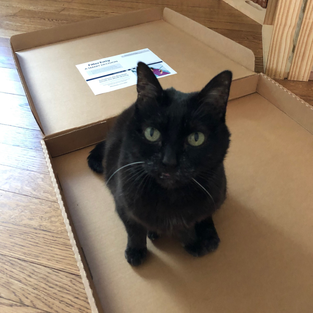 kitty in a second nature box
