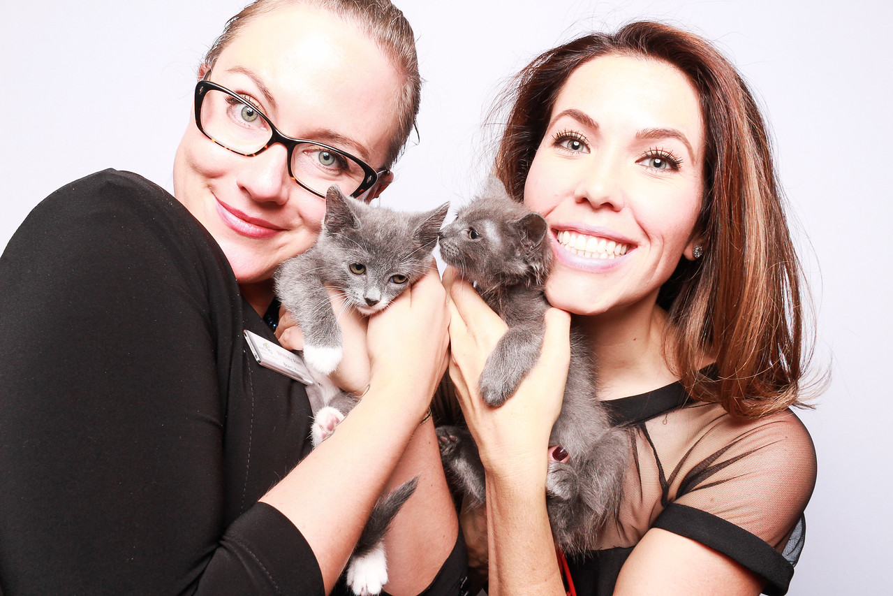 Kitten Photo Booth