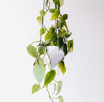 A hanging planter product being recommended by Digital Assistant to a customer