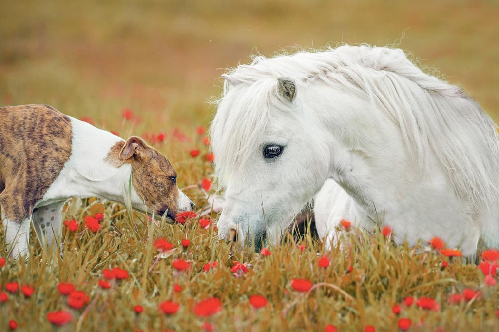 10 Ways to keep your horses happy