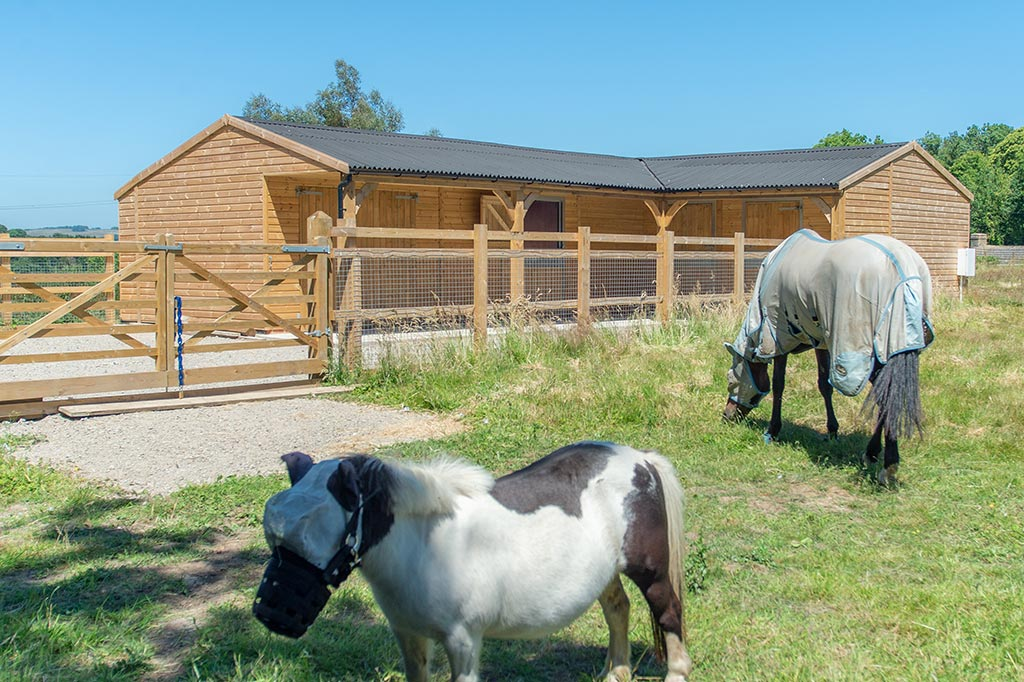 What size stable does my horse need?