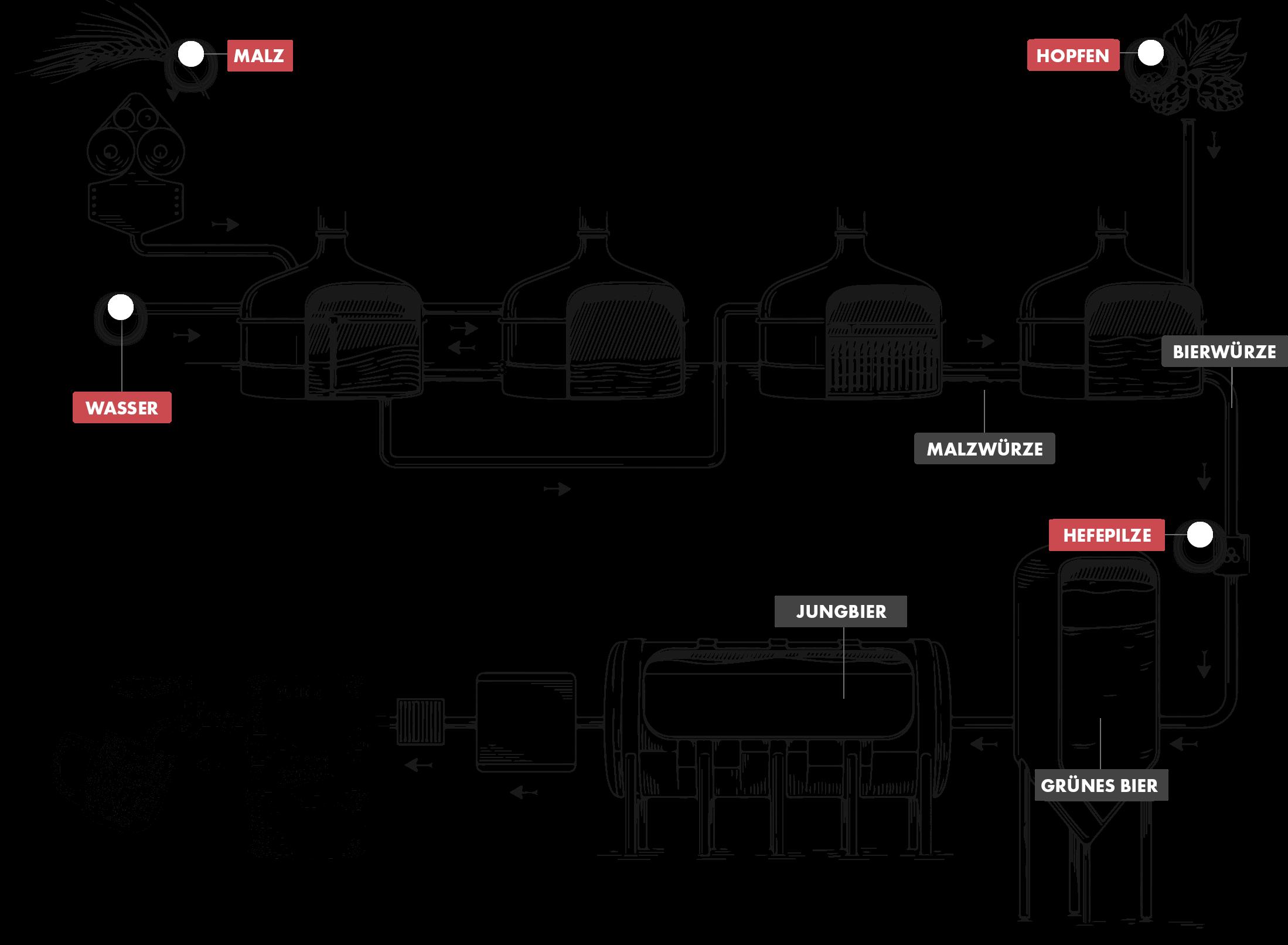 Das Bild beschreibt die Herstellung von Bier