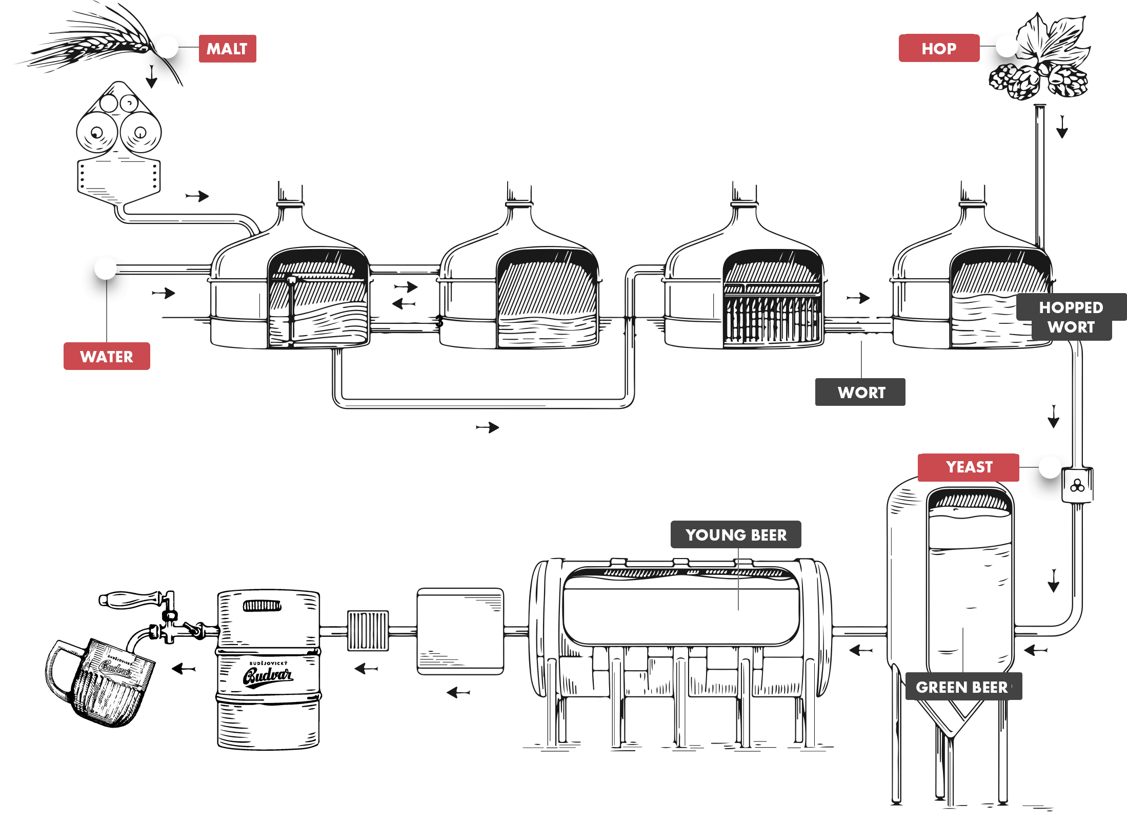 The picture describes the production of beer production