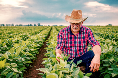Factoring agriculture companies in Chicago, Illinois (IL)