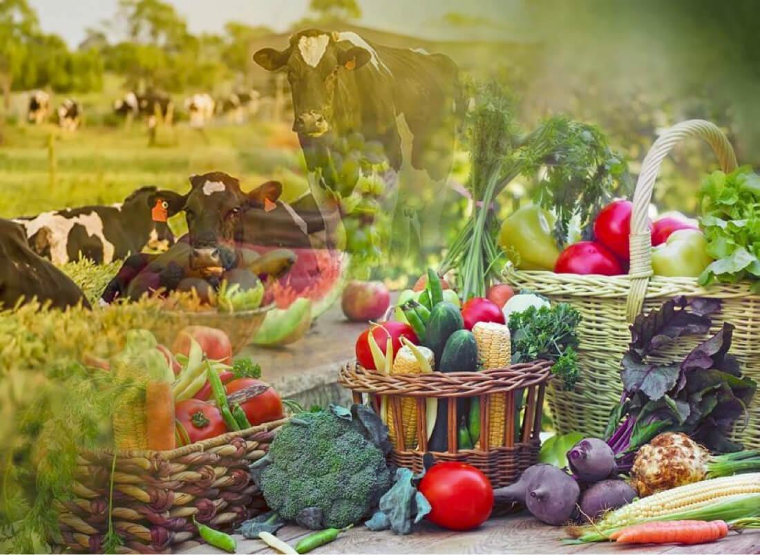 Agriculture vegetables livestock