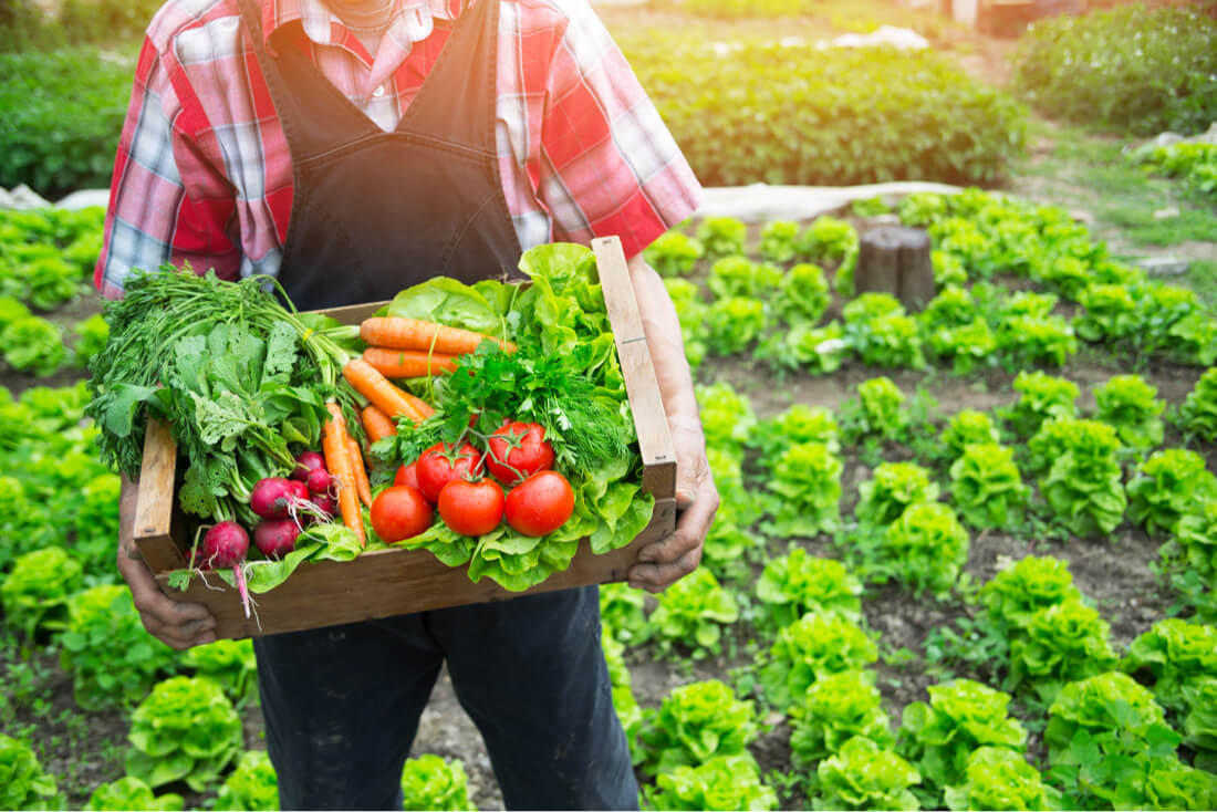 food service produce suppliers central Texas
