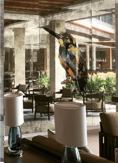 Kingfisher -Hilton Hotel, Cape Verde