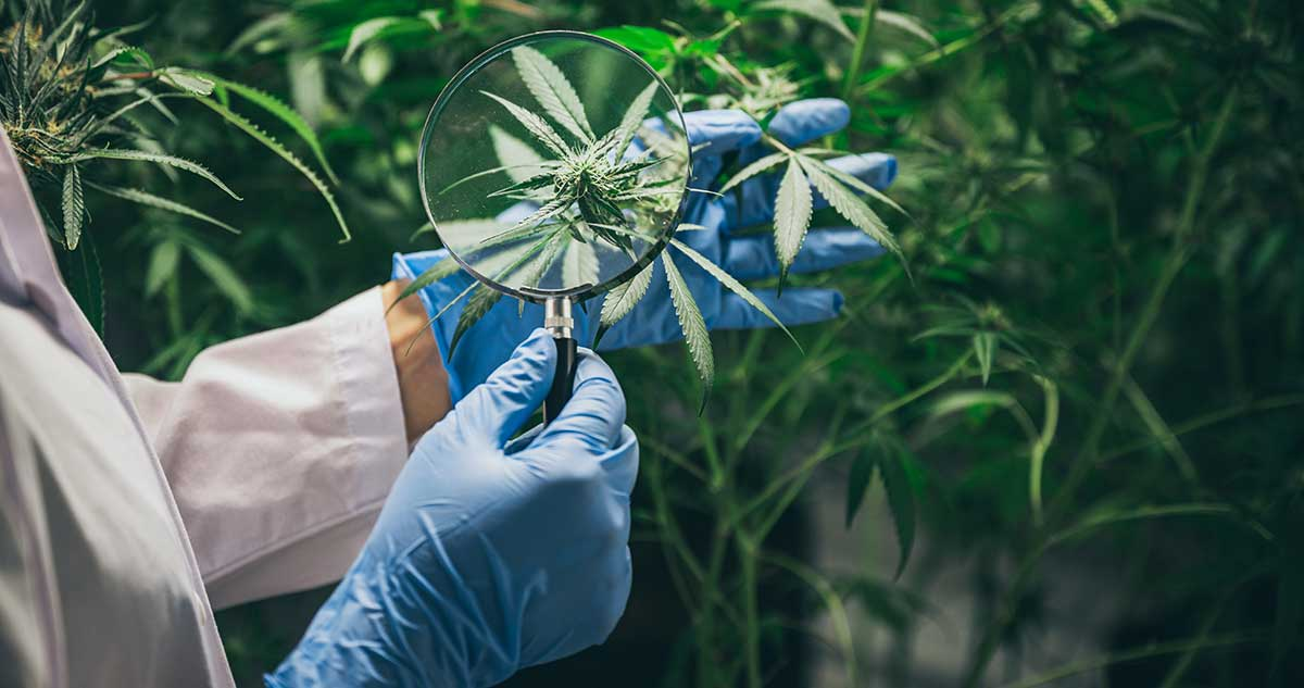 Cannabis for Multiple Sclerosis - What's the Research Say?