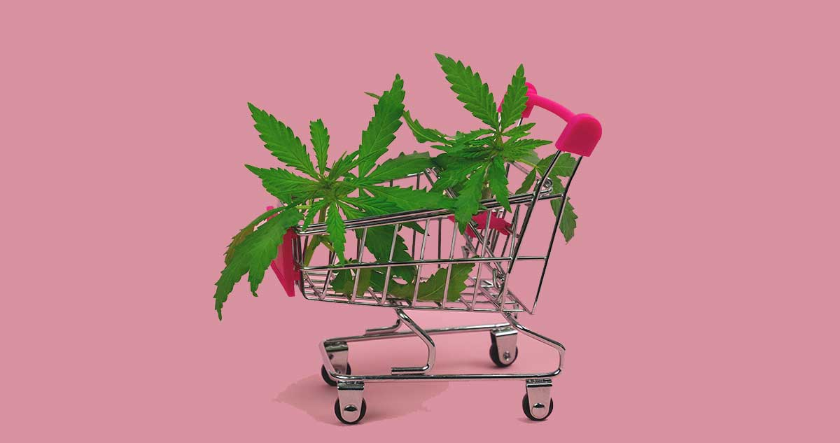 Learn Why You're Shopping Wrong For Cannabis When Searching For The Highest THC