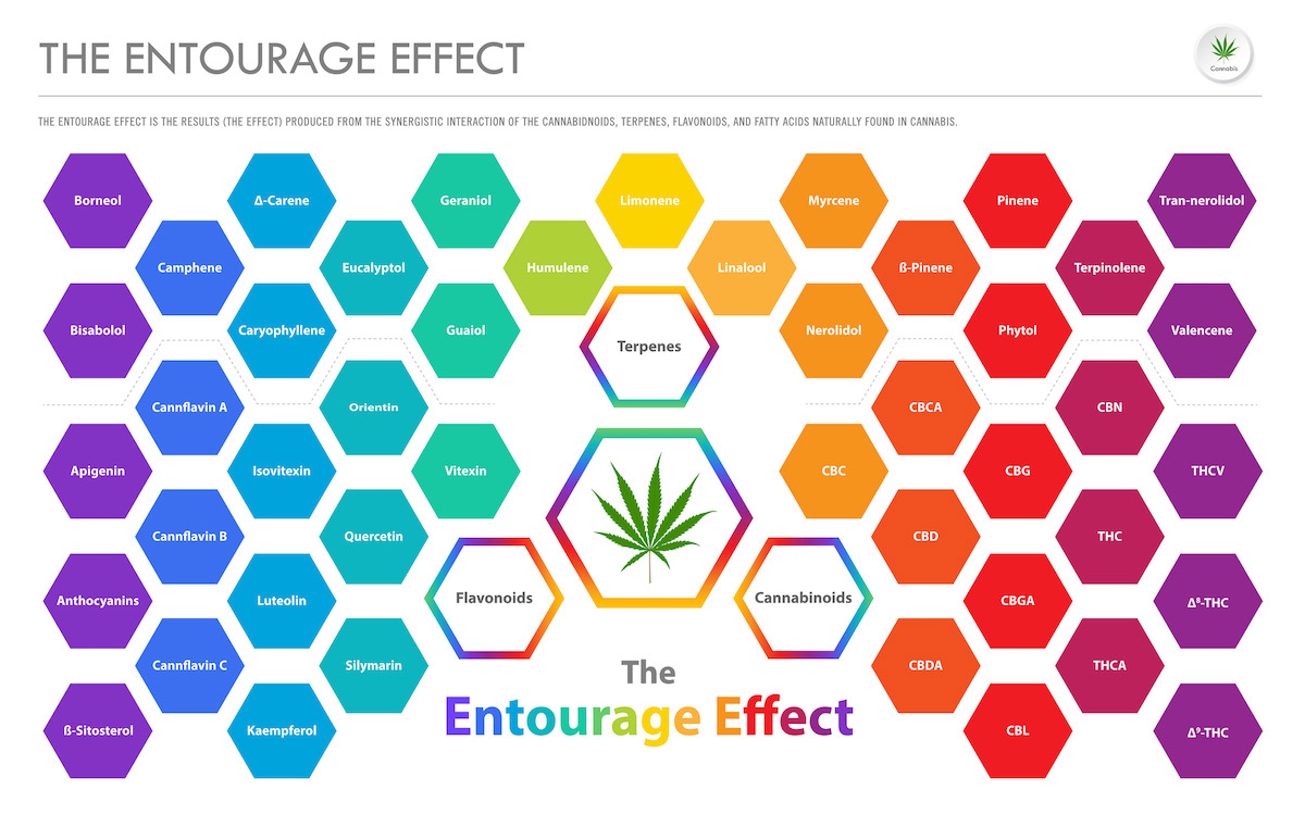 How Does the Entourage Effect Work?