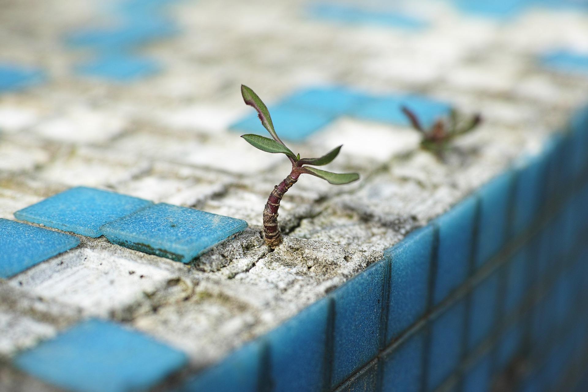 plant in concrete jungle