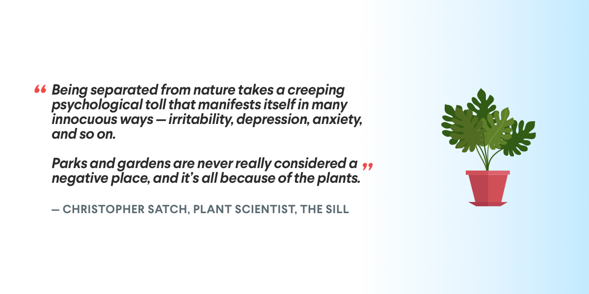 The Sill Christopher Satch Plant Quote