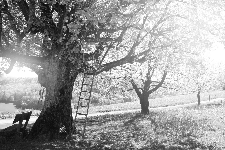 Schwarzweissbild von Bäumen ohne Blätter