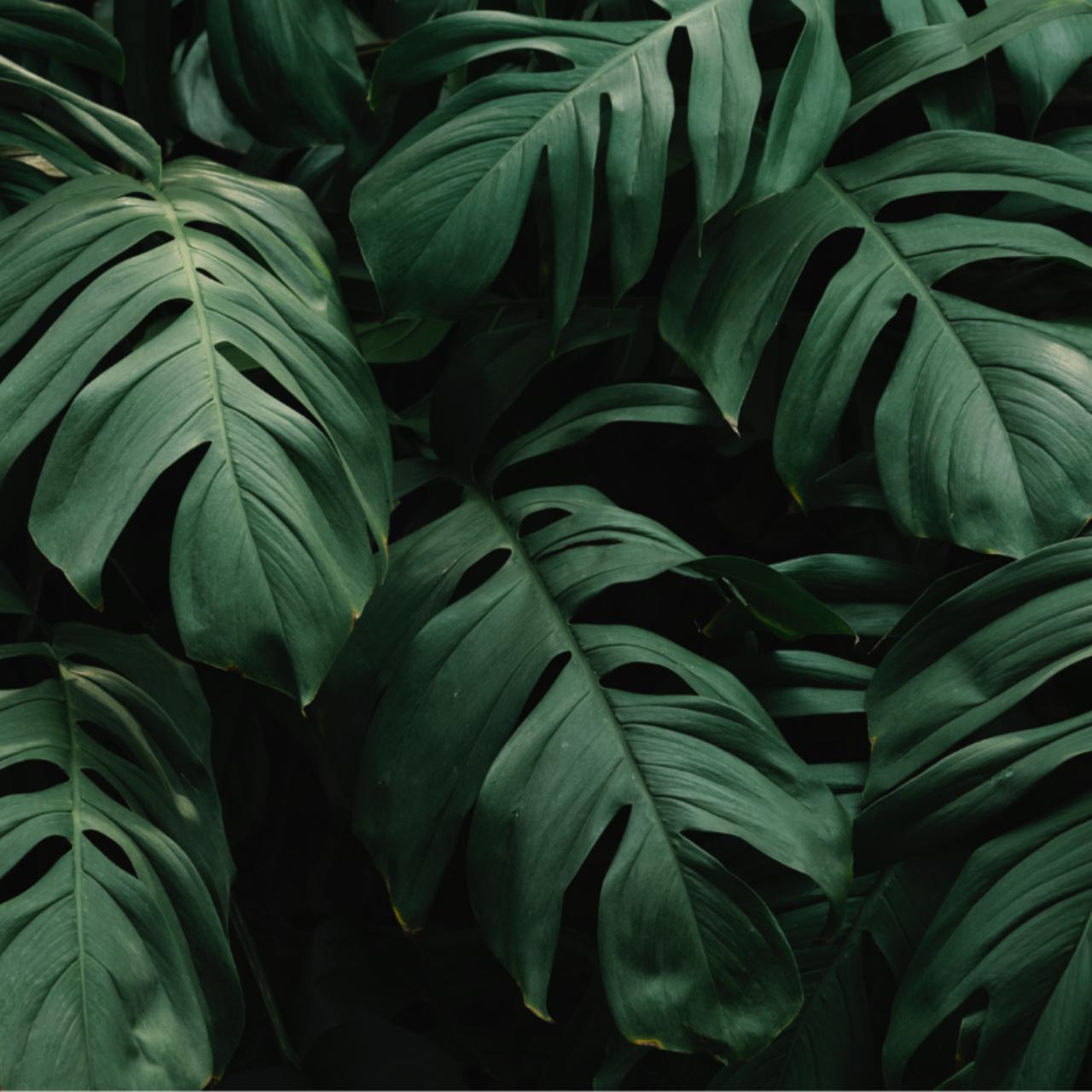 Grosse grüne Blätter