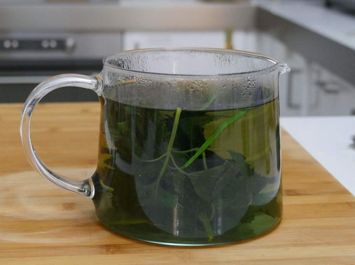 Tee mit gewaschenen Shiso-Blättern