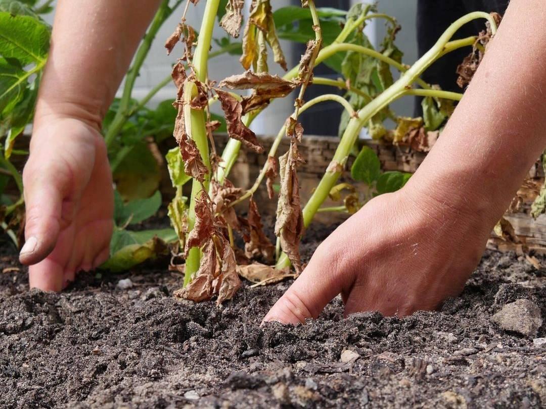 mit den Händen tief in den Boden greifen