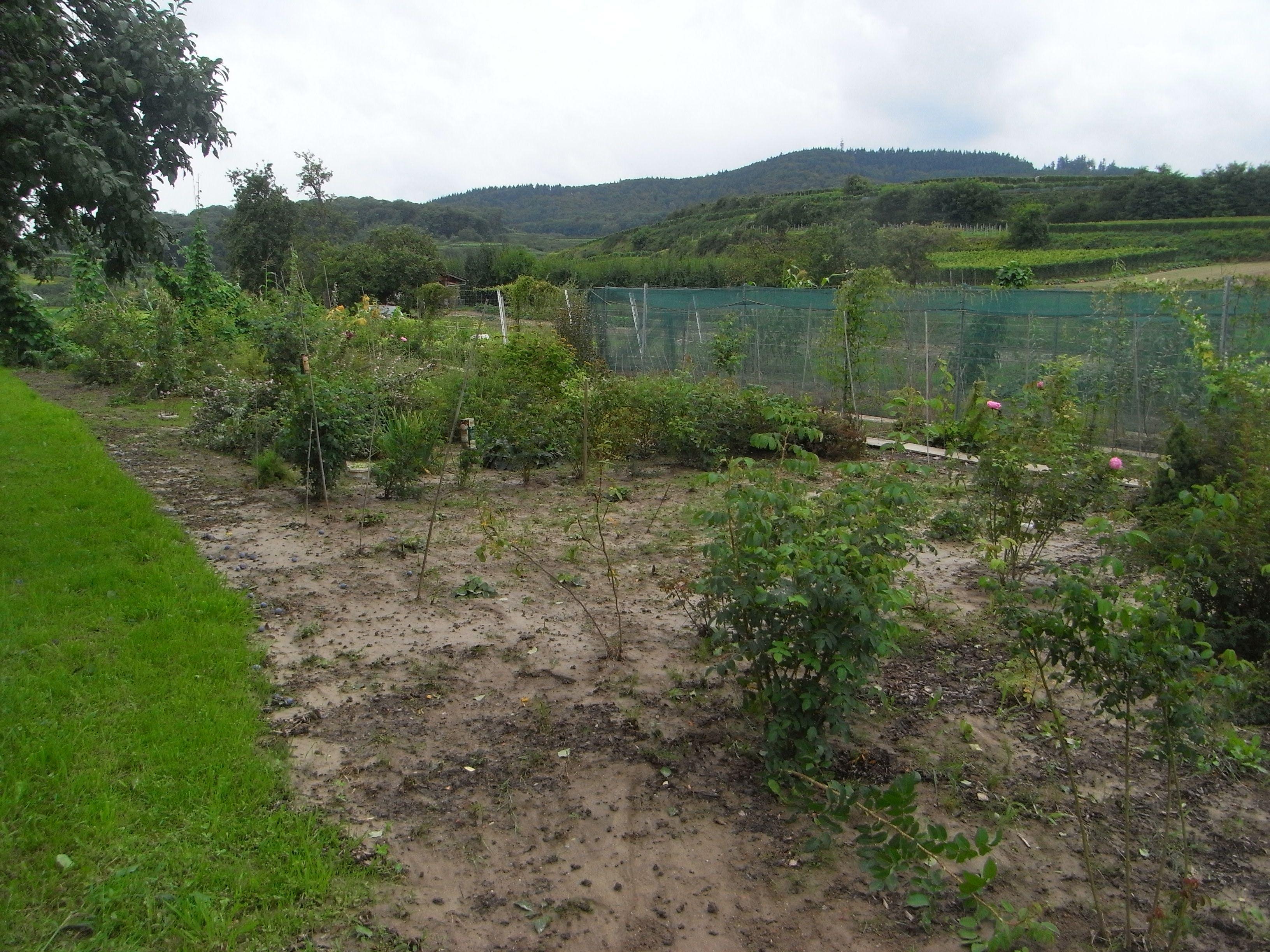 Wasserkreislauf: Niederschlag auf dem Feld