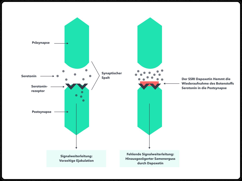 Dapoxetin hemmt die Wiederaufnahme des Botenstoffes Serotonin in die Nervenzelle   Spring