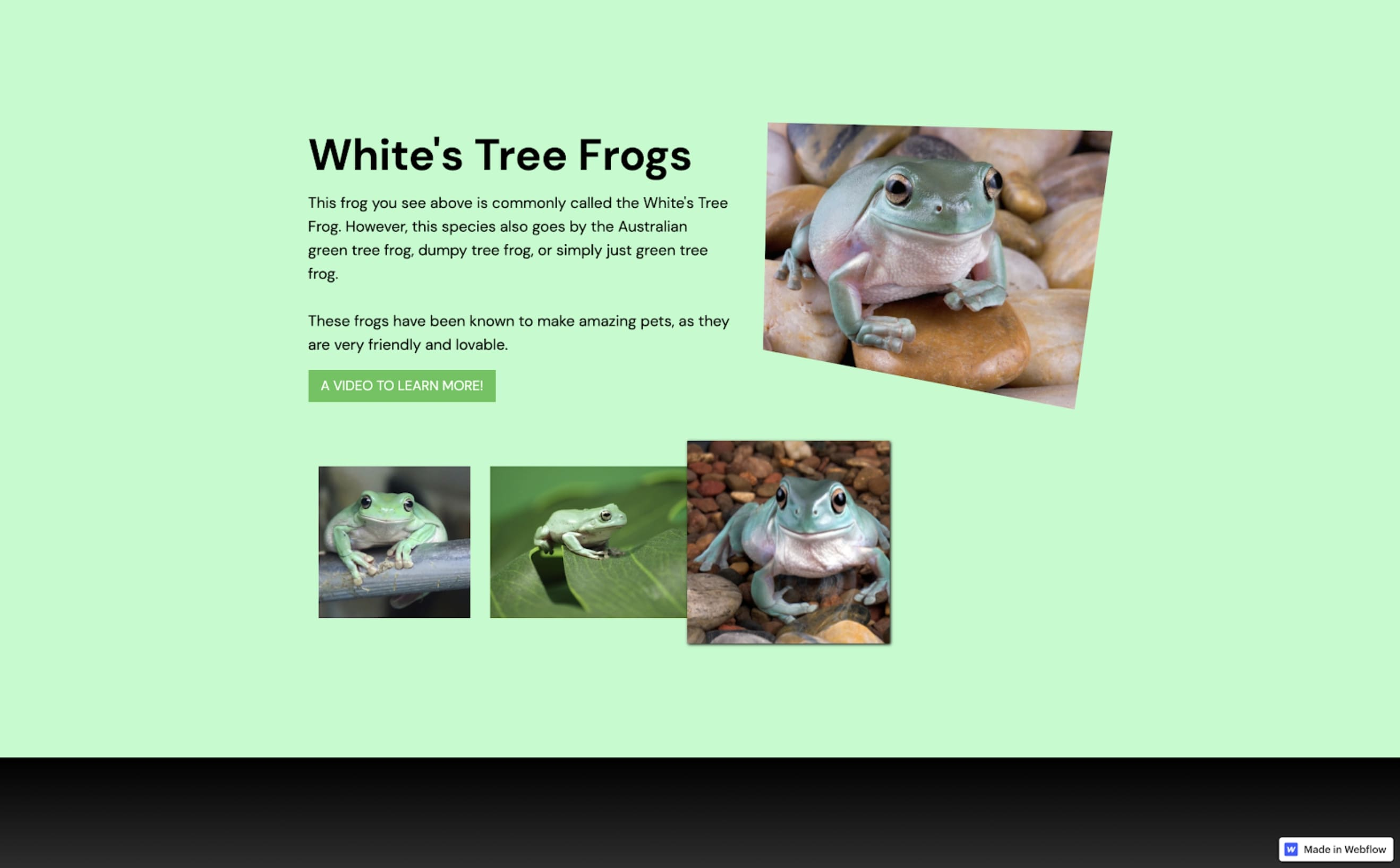 the frog fan page