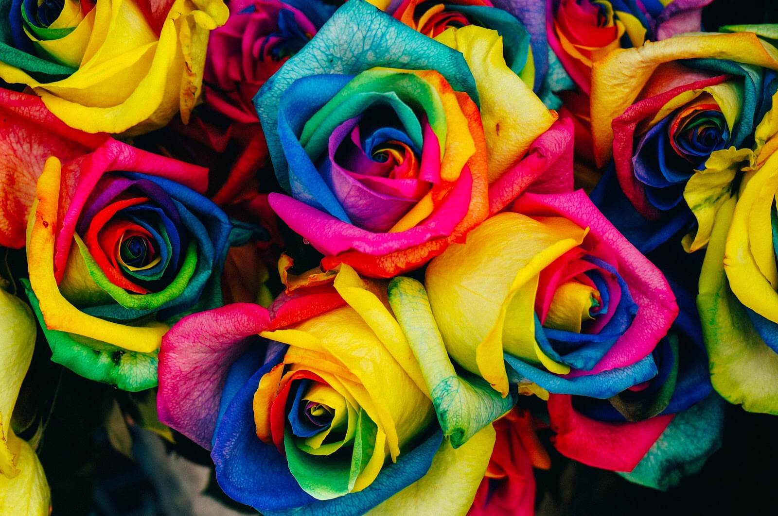 image of colorful roses