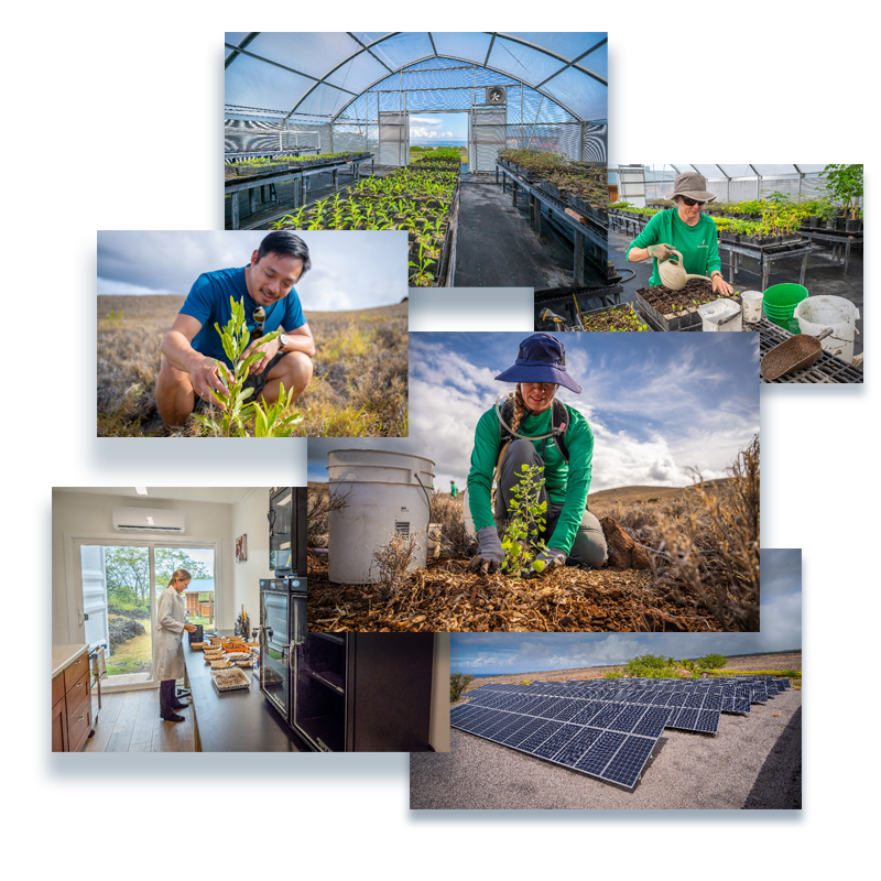 A collection of photographs, each showing different views of from the Terraformation property in Hawaii. Yishan Wong with a young tree, tree nursery, forestry workers, and a picture of a very large solar array.