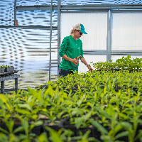 A Terraformation nursery specialist tends to new trees that are still very small and beed care before planting. The nursery is built from a do-it-yourself style kit that the company manufactures and can ship to any location around the world.