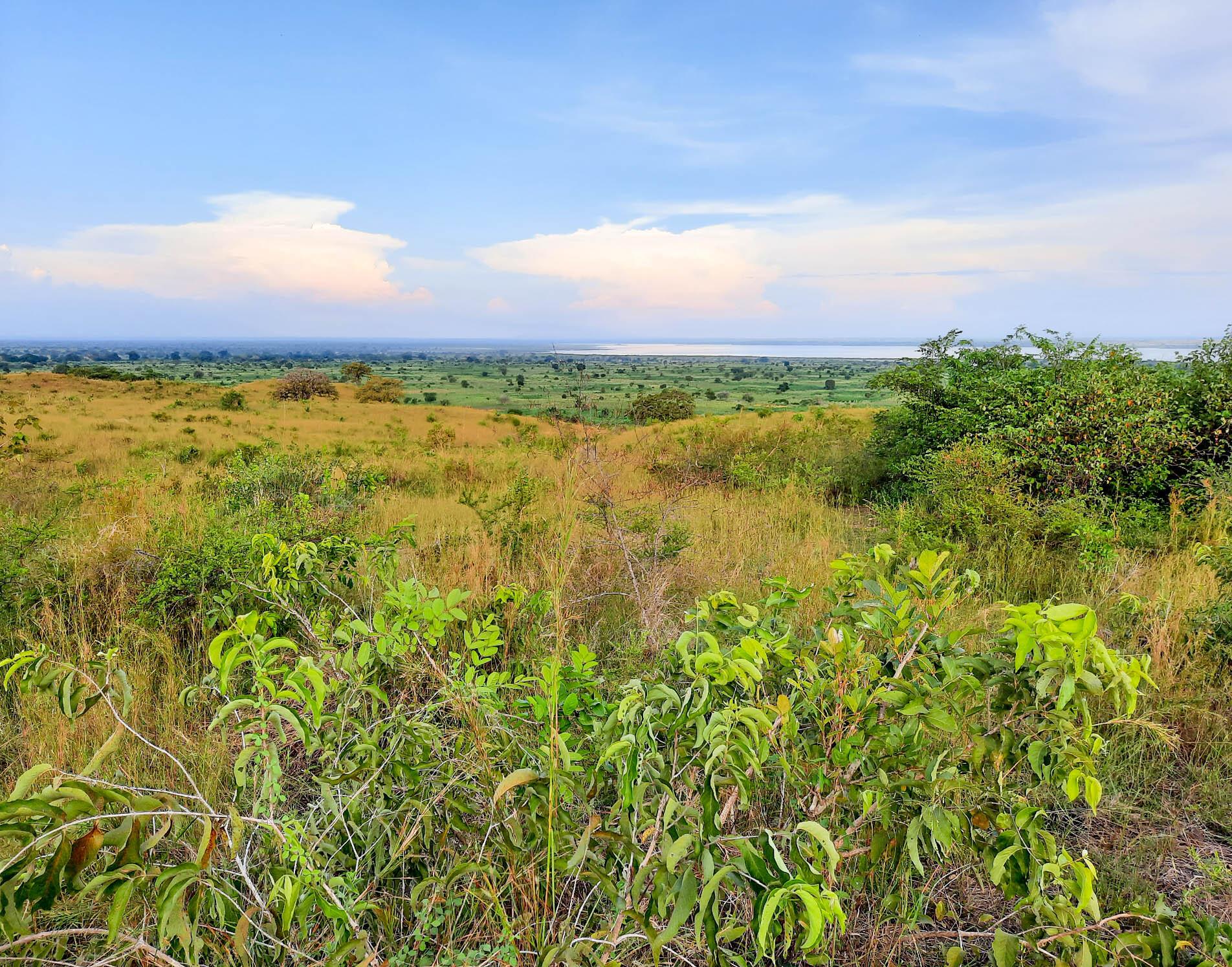 Terraformation partners with Environmental Defenders to restore 450 acres of native savannah and dry grassland in Uganda's Lake Albert region.