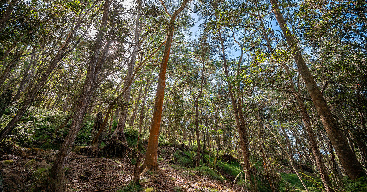 To win, solutions will need to beat the largest existing carbon removal system on Earth: forests.