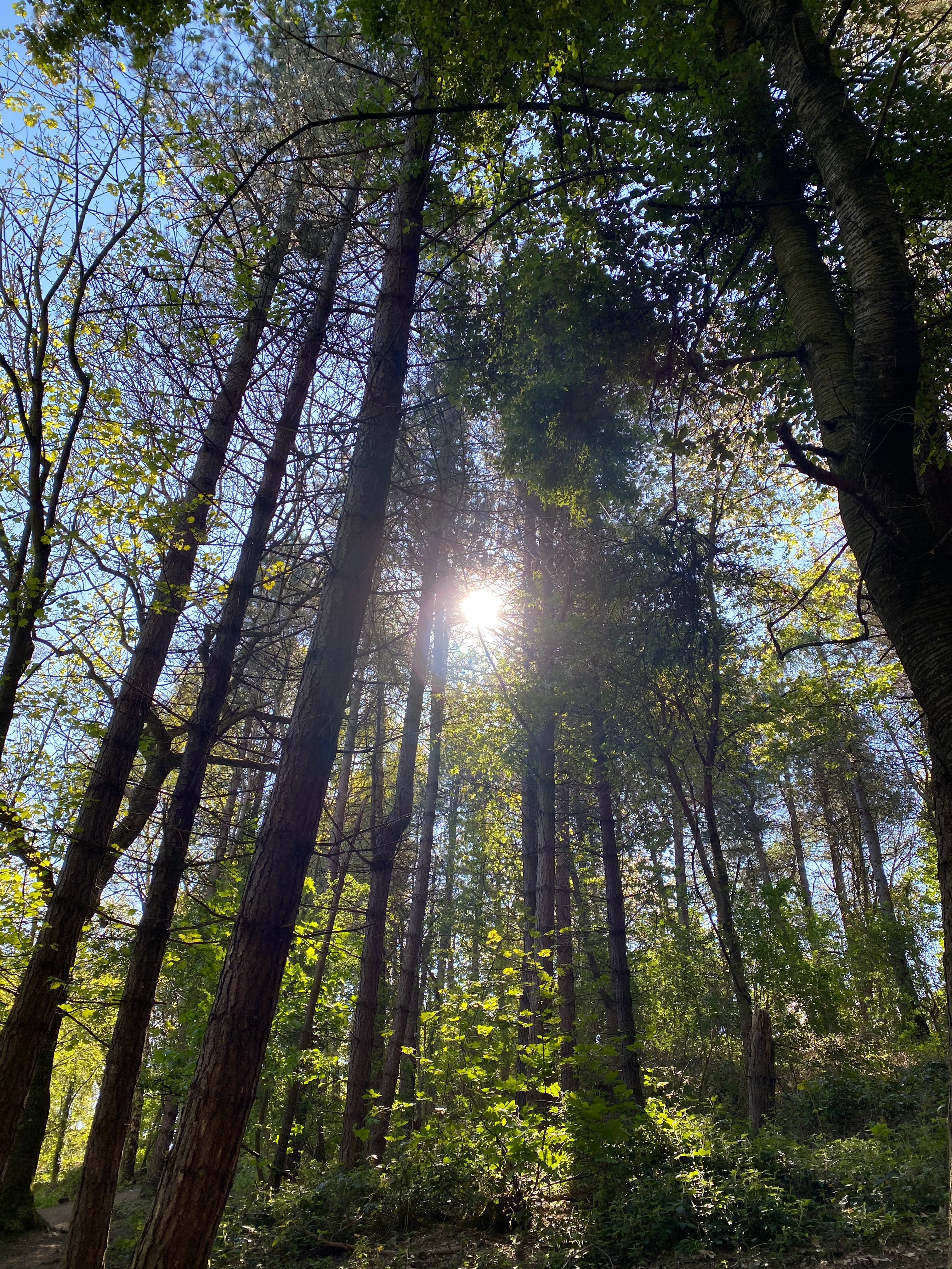 Sunshine comes through the trees at Hermitage of Braid