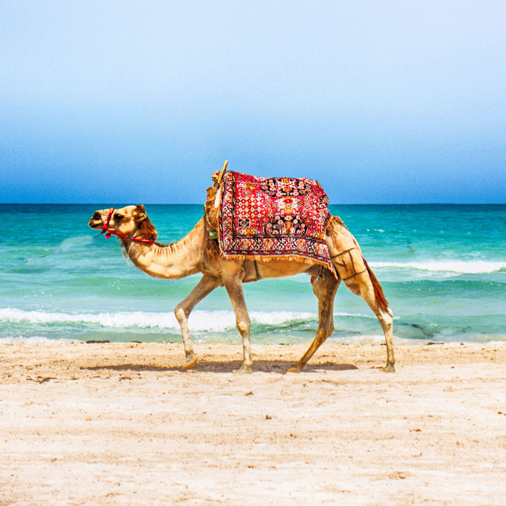 Ceny w Tunezji 2020 – modne wakacje w dobrej cenie?