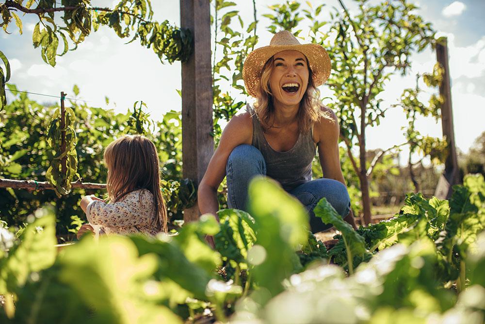 Ogródki działkowe, tzw. ROD: jak nabyć działkę, ile kosztuje i jakie są zasady korzystania?