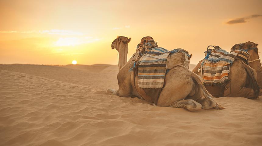 Atrakcje i ceny w Tunezji 2021 – ile kosztują wakacje w Tunezji